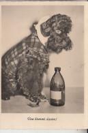 HUNDE - PUDEL / Poodle / Caniche / Barboncino / Poedel - Hunde