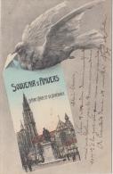 Antwerpen   Postduif   Souvenir De Anvers                 Scan 6096 - Antwerpen