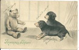 CHIENS + OURS EN PELUCHE - Dogs