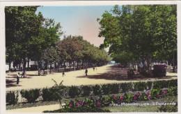 Cp , 34 , MONTPELLIER , L'Esplanade - Montpellier