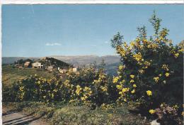 22250 Tanneron Et Ses Mimosas - Coll Blanc Tabac Tanneron 9101