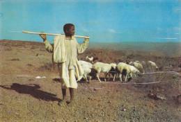 AFRIQUE,AFRICA,AFRIKA,DJIBOUTI,métier ,BERGER,jeune éleveur Avec Baton De Dressage - Djibouti