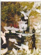 22278 St Saint Paul De Vence -colombes De St Paul , Colombe D'or -3.27.75.1241 Cim