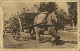 Olifant - Elephant  : Equipage Gracieux :  Bevallige Koets :  (  Attelage )  Carte Martougin Chocolat - Éléphants