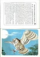Journal De Mickey  La Chouette Hulotte  N ° 97 - Animaux