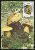 Romania Rumänien MC (1) Maximum Card Mushrooms Snail Moss Pilze Schnecke Moos °PK0049 - Pilze