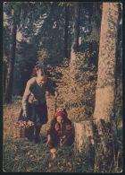 USSR Russia Stationery Card 1954 Mushrooms Picker Forest Child Pilze Wald Kinder Ganzsache °PK0106 MNH - Pilze