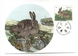 CARTE MAXIMUM FINLANDE ENTIER POSTAL LAPIN  LIEVRE  PATTES D´ANIMAUX CAROTTE - Rabbits
