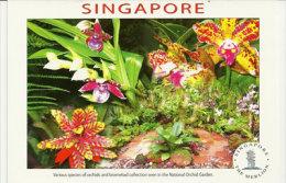 Les Orchidées De Singapour (National Orchid Garden) . Une Carte Postale Neuve - Singapore