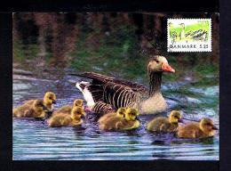 DANMARK 1999 Birds Oiseaux Aves Faune Animals Animaux Fauna Carte Maximum Cards Mc208 - Birds