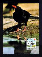 ISLE OF MAN 1979 Birds Oiseaux Aves Chough Le Grave A Bec Rouge Faune Animals Animaux Fauna Carte Maximum Cards Mc209 - Birds