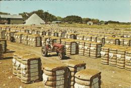 ETATS UNIS COLUMBIA BALES OF COTTON AGRICULTURE RECOLTE DU COTON - Autres