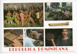 REF EY1 : CPM Carte Postale Grand Format République Dominicaine Republica Dominicana Fabrication De Cigare Cigares - Dominicaine (République)