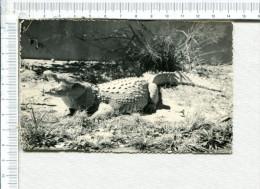 CROCODILE  -  MADAGASCAR  -   - Timbres - Animaux & Faune