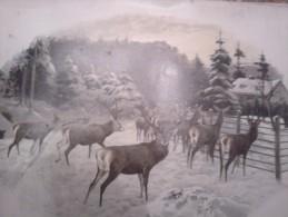 Lithographie JAGD HUNT HIRSCH  Damhirschkuh  ROTWILD  DIMEN.51 Cm X 39 Cm DER ALTE ZEITEN - Sport