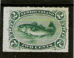 NEWFOUNDLAND 1879 2c  SG 41 MINT NO GUM Cat £160 ROULETTED PERF. - Newfoundland