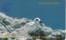 ASCENSION ISL.(GPT) - Fairy Tern, CN : 3CASB, Tirage 5000, Used