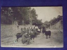 Le Chévrier Et Ses Chèvres 1904 - Elevage