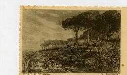 Ravenna - La Pineta - Disegno Di Vit. Guaccimanni. - Ravenna