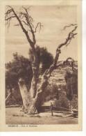 ISRAEL - HEBRON - OSK OF ABRAHAM - Israel