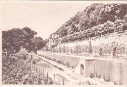 22313 SAMOREAU (77 France) ECOLE HORTICULTURE PRESSOIRS ROY FONDATION COGNACQ-JAY Treille Royale