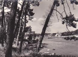 22329 Bretagne Sainte Marine Vue Sur Benodet -423 Pouillot Ehanno Pont L'abbé