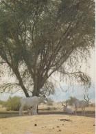 ISRAEL,RESERVE NATURELLE EILATH,EILATH,protection Des Animaux,les Bouquetins,race En Voie D´extinction,prés Egypte - Israel