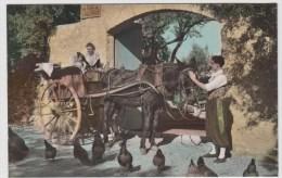 AK - Mallorca - Pferdegespann Mit Bauern In Tracht Und Hühnern 1957 - Wagengespanne