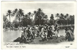 Post Card  - The Arab Irrigation On Tigris. No Sent. - Iraq