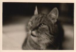 ANCIENNE PHOTO CHAT CHATS ** VINTAGE PHOTO CAT CATS ** OUDE FOTO KAT KATTEN KATZE - Personnes Anonymes