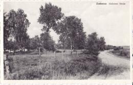 ZONHOVEN : Holsteen Heide - Zonhoven
