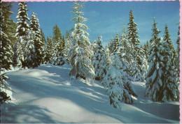 Happy New Year - Nature In Winter, 1971., Yugoslavia () - Anno Nuovo