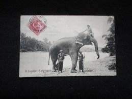 Sri Lanka : Ceylon : Eléphants. - Sri Lanka (Ceylon)