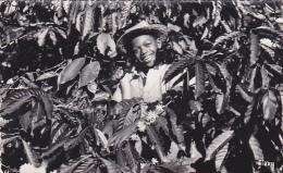 22362 UN COIN DE MADAGASCAR VU PAR STAVY N° 519 DANS LES CAFEIERS -enfant