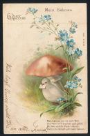 Gruss Aus 1903 Dove Mushrooms Pilze Taube °AK0105 - Gruss Aus.../ Grüsse Aus...