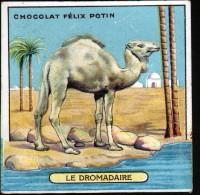 CHROMO FELIX POTIN - N°23 LE DROMADAIRE - Félix Potin