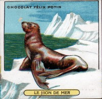 CHROMO FELIX POTIN - N°15 LE LION DE MER - Félix Potin