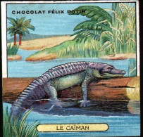 CHROMO FELIX POTIN - N°10 LE CAIMAN - Félix Potin