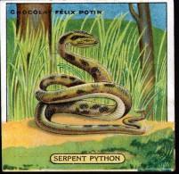 CHROMO FELIX POTIN - N°12 SERPENT PYTHON - Félix Potin