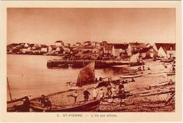 SAINT PIERRE ET MIQUELON(975)/ SAINT-PIERRE / L´Ile Aux Chiens / Animation - Saint-Pierre-et-Miquelon