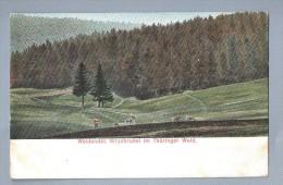 Weidendes Hirschrudel Im Thurlinger Wald UNUSED - Allemagne