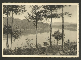 Italia - Lago - Pioppi - Bosco - Formato Grande - Postcards