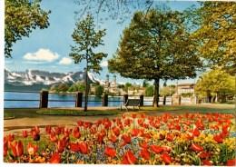 C P M----ALLEMAGNE--SEEPROMENADE IN FRIEDRICHSHAFEN----voir Scans - Friedrichshafen