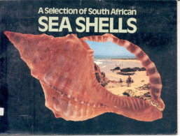 """""""A SELECTION OF SOUTH AFRICAN SEA SHELLS"""" FULL COLOR PHOTOS! GECKO. - Books, Magazines, Comics"""