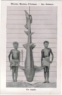 OCEANIE / ILES SALOMON / Un Requin / Animation - Salomon
