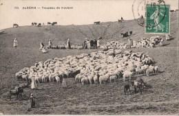 ALGERIE TROUPEAU DE MOUTONS CPA NO 115 - Other