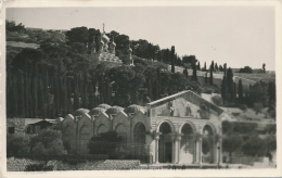 JERUSALEM - Garten GETHSEMANE Am Fusse Des Ölbergs - Jordanien