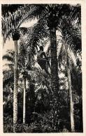 DAHOMEY . RECOLTE DES REGIMES DE PALMIERS A HUILE . - Dahomey