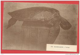 Cpa La Guadelopue Illustrée Tortue N° 312  édition Boisel - Pointe A Pitre