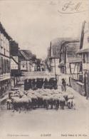 22458 ALSACE Départ Au Champs (troupeau De Moutons Et Bergères) ! Pliure ! Ovin